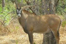 La faune du Sine Saloum