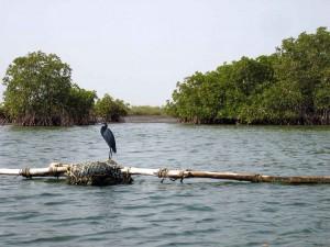 Tourisme Sénégal les endroits incontournable