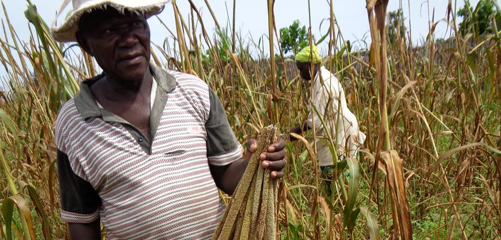 Le Sine Saloum et l'agriculture