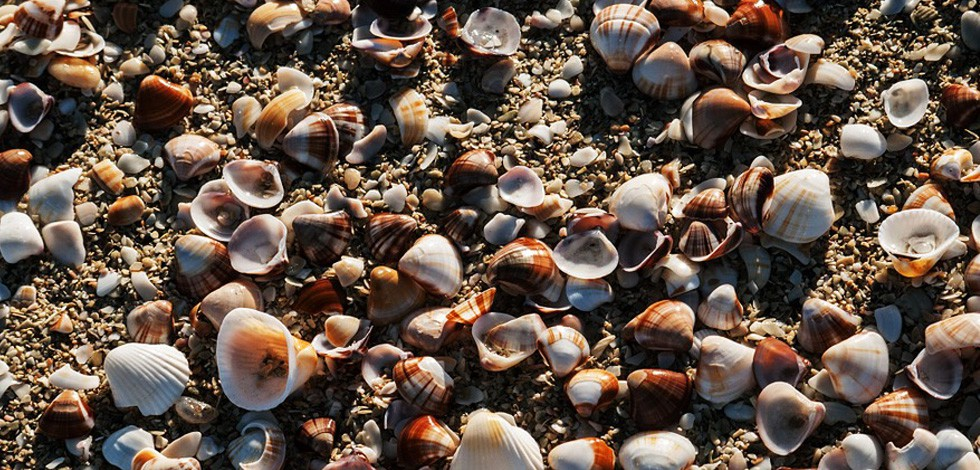 Excursion Sine Saloum - L'île aux coquillages